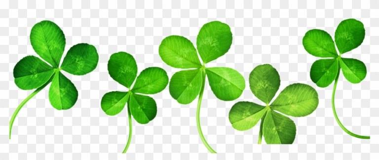 50-502384_four-leaf-clover-clip-art-4-leaf-clover-banner.png