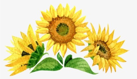 52-524174_sunflower-hd-png-download.png