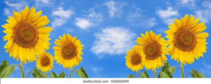 banner-summertime-blue-sky-clouds-260nw-1036033699.jpg